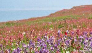 Mar Muerto se llena de flores y se cumple profecía de Ezequiel en Israel